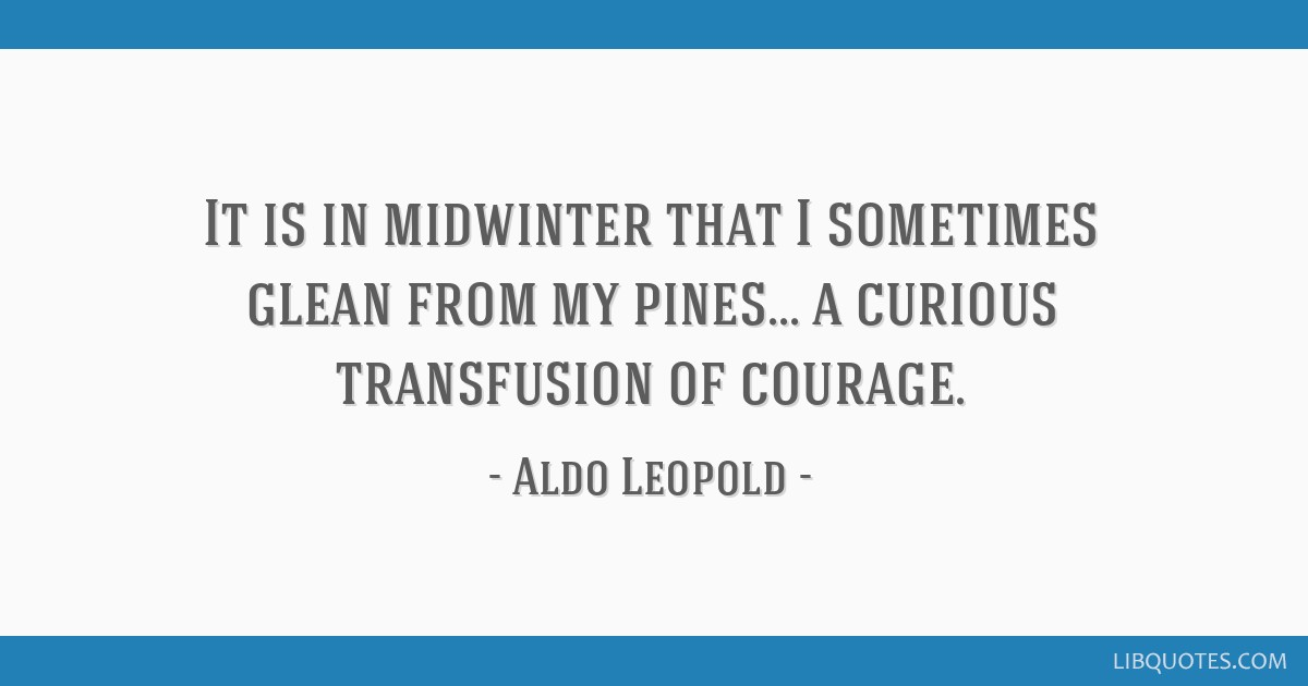 It is in midwinter that I sometimes glean from my pines... a curious transfusion of courage.