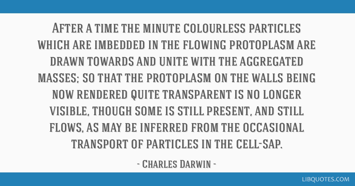 After a time the minute colourless particles which are imbedded in the flowing protoplasm are drawn towards and unite with the aggregated masses; so...