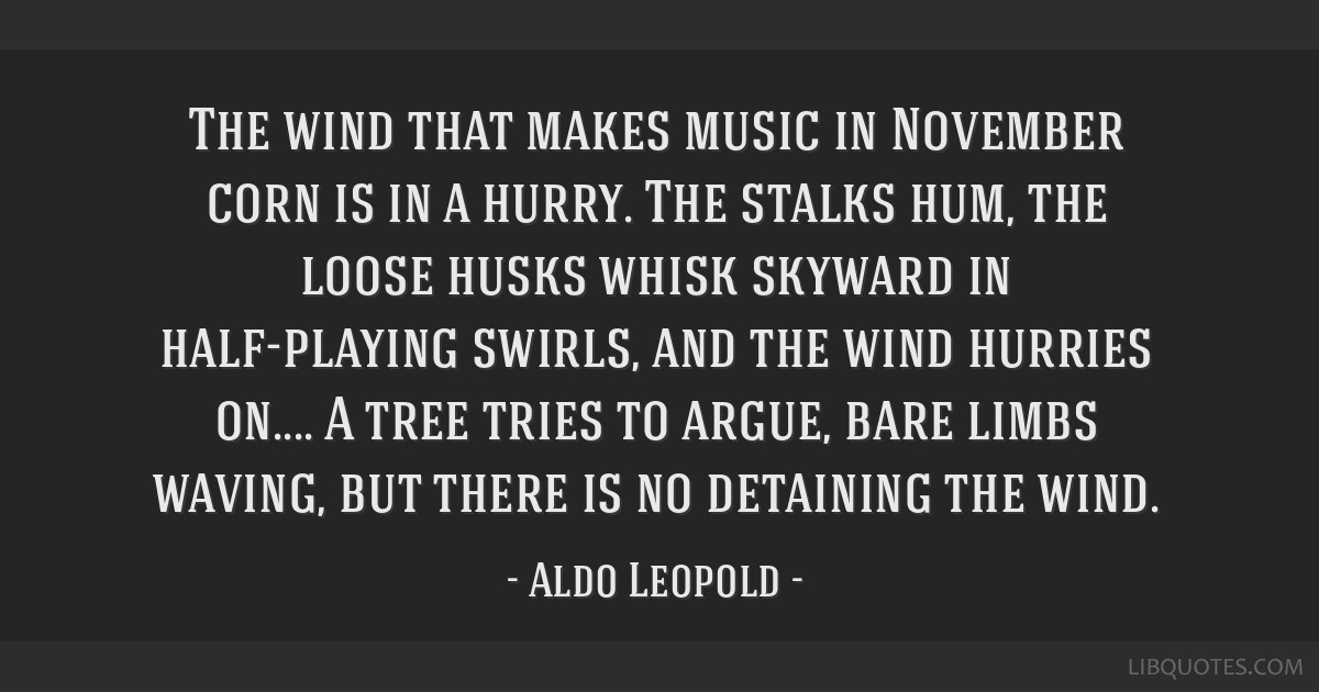 The wind that makes music in November corn is in a hurry. The stalks hum, the loose husks whisk skyward in half-playing swirls, and the wind hurries...