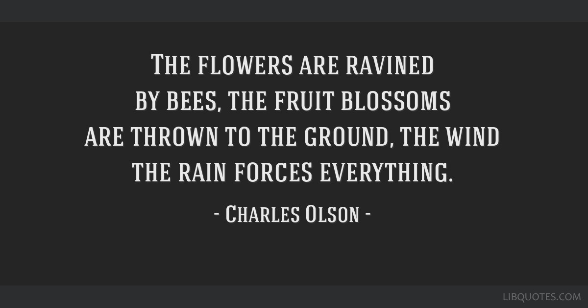 The flowers are ravined by bees, the fruit blossoms are thrown to the ground, the wind the rain forces everything.