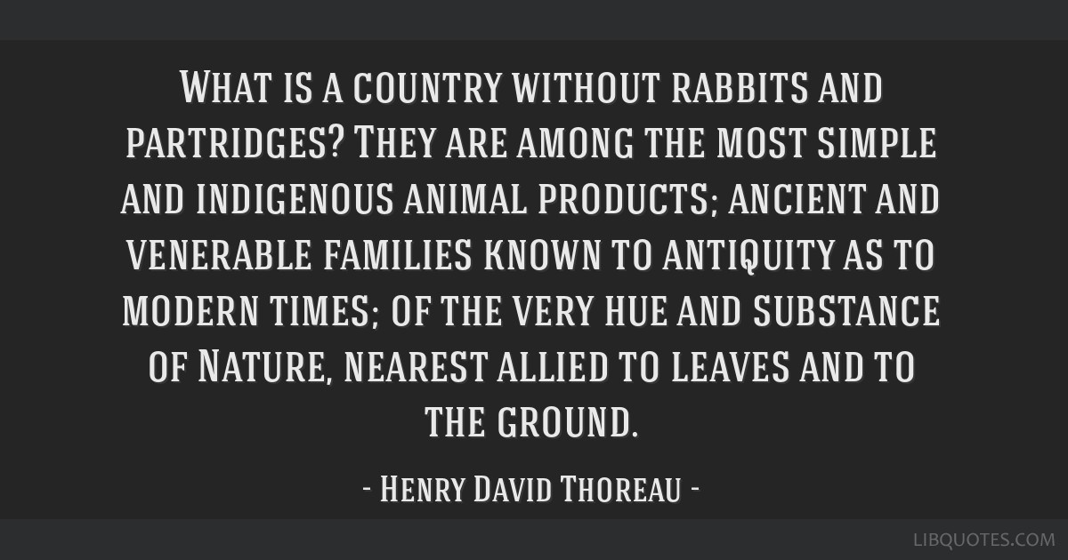 What is a country without rabbits and partridges? They are among the most simple and indigenous animal products; ancient and venerable families known ...