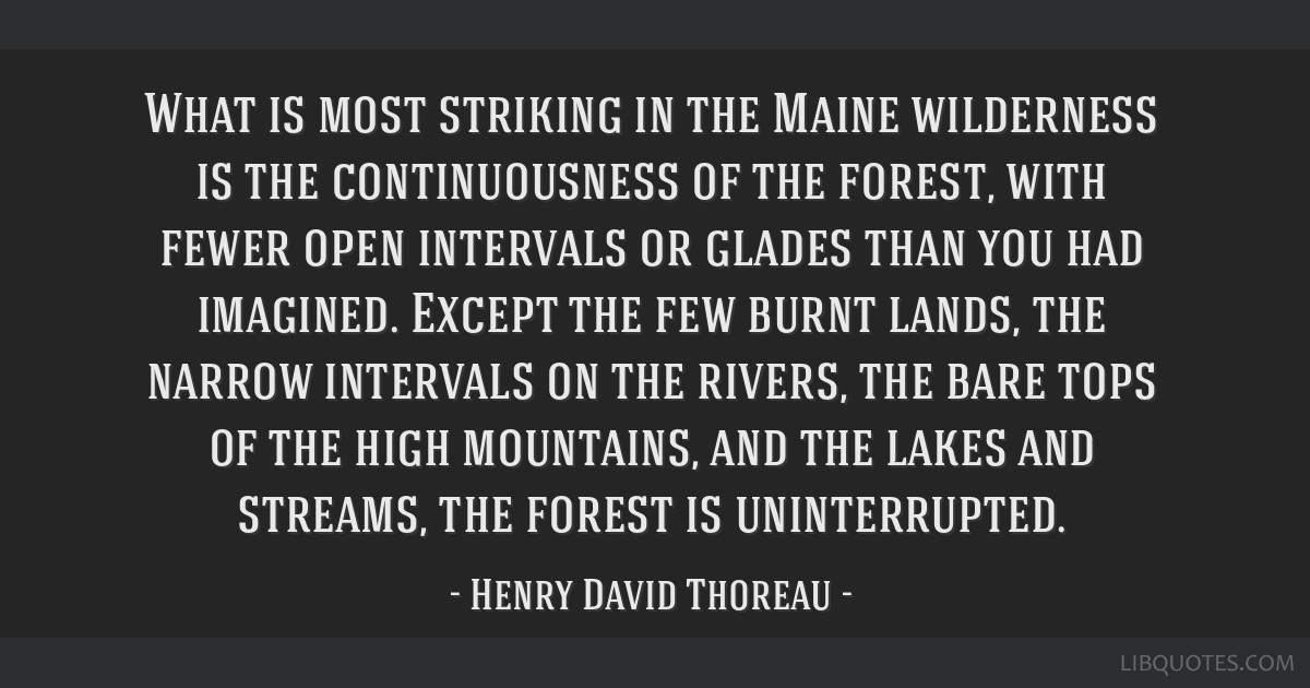 What is most striking in the Maine wilderness is the continuousness of the forest, with fewer open intervals or glades than you had imagined. Except...