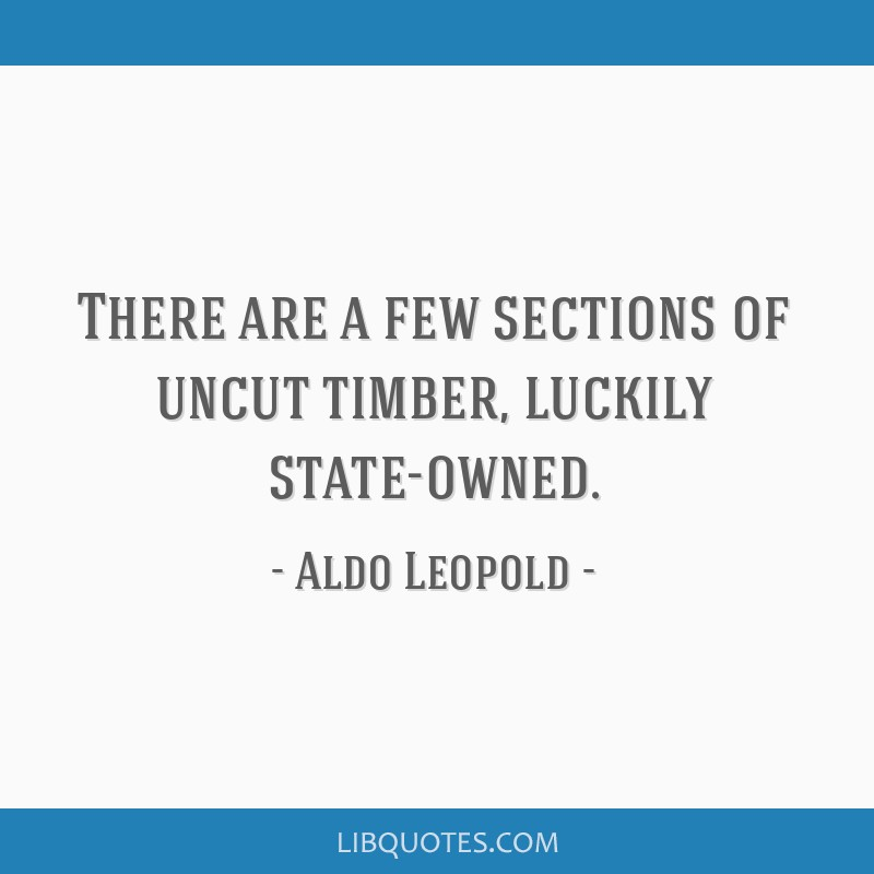 There are a few sections of uncut timber, luckily state-owned.