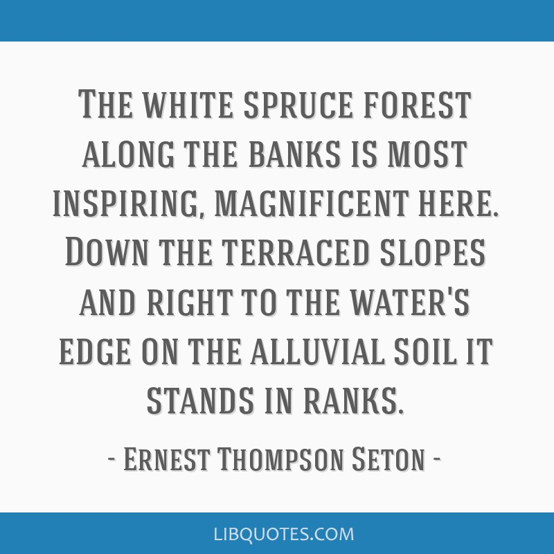 The white spruce forest along the banks is most inspiring, magnificent here. Down the terraced slopes and right to the water's edge on the alluvial...