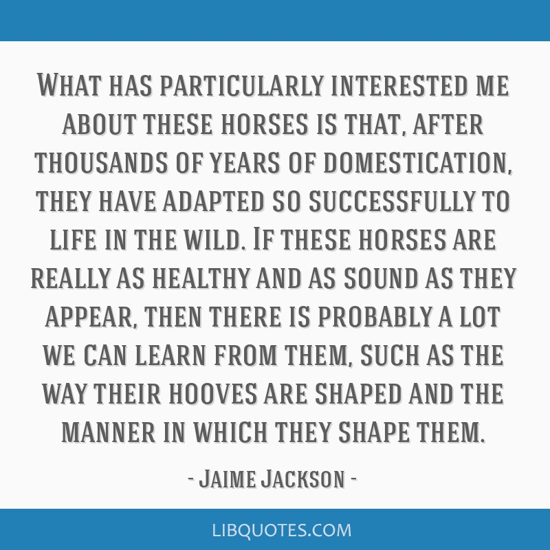 What has particularly interested me about these horses is that, after thousands of years of domestication, they have adapted so successfully to life...