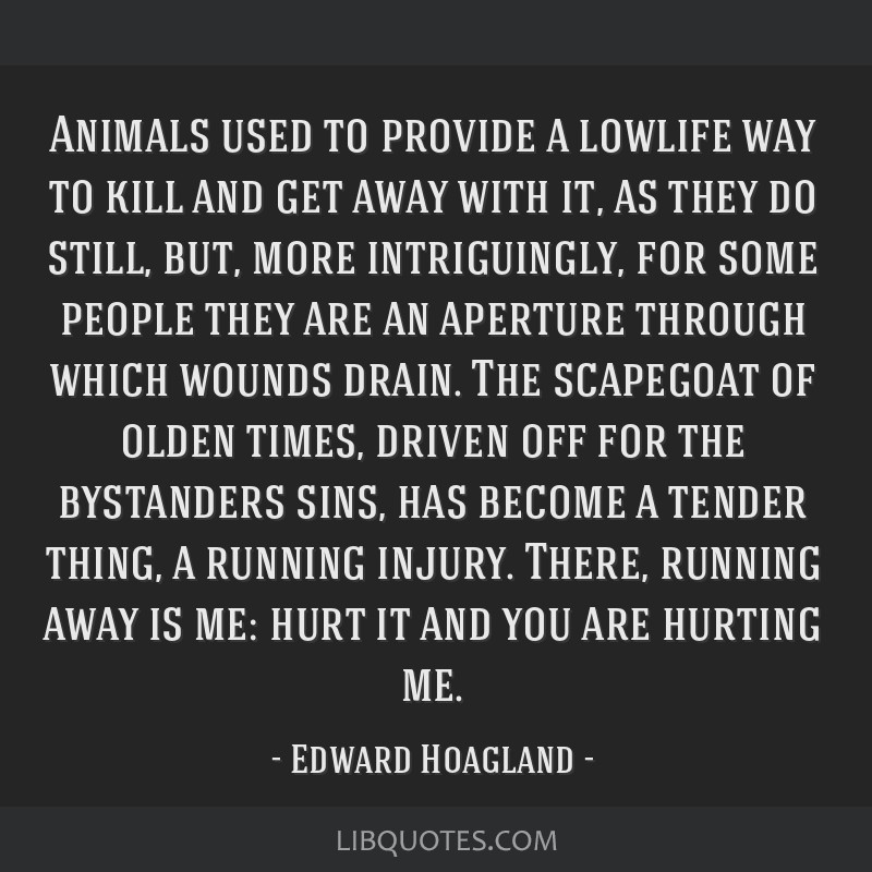 Animals used to provide a lowlife way to kill and get away with it, as they do still, but, more intriguingly, for some people they are an aperture...