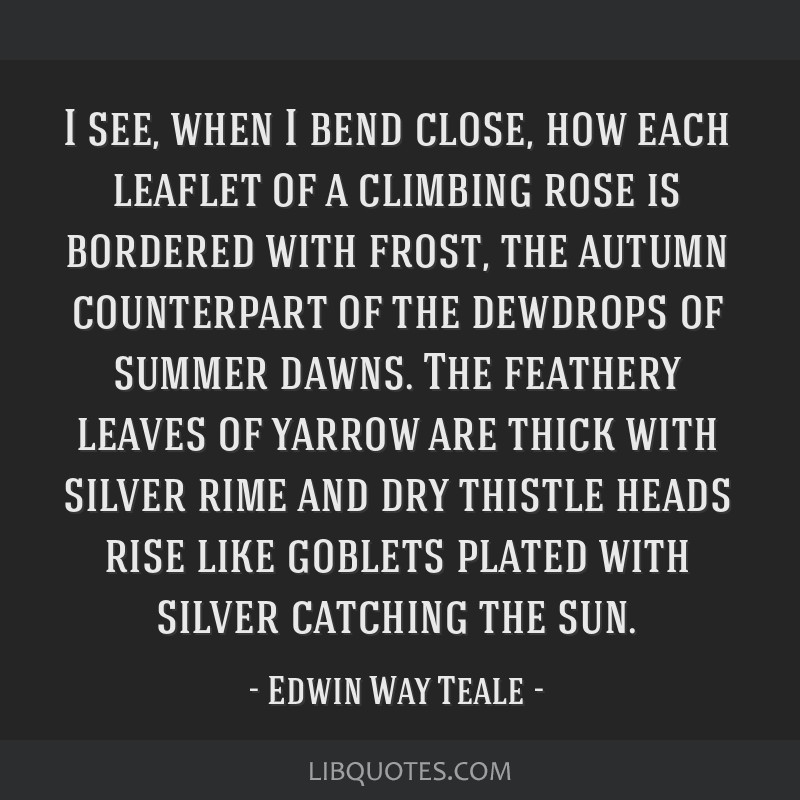 I see, when I bend close, how each leaflet of a climbing rose is bordered with frost, the autumn counterpart of the dewdrops of summer dawns. The...