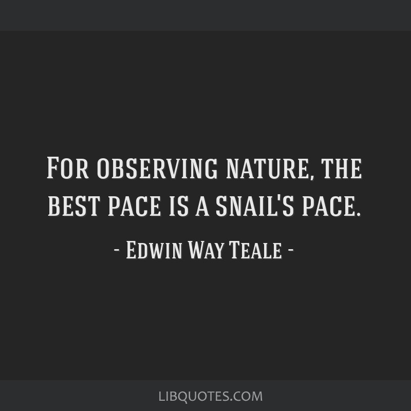 For observing nature, the best pace is a snail's pace.