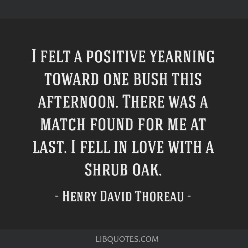 I felt a positive yearning toward one bush this afternoon. There was a match found for me at last. I fell in love with a shrub oak.