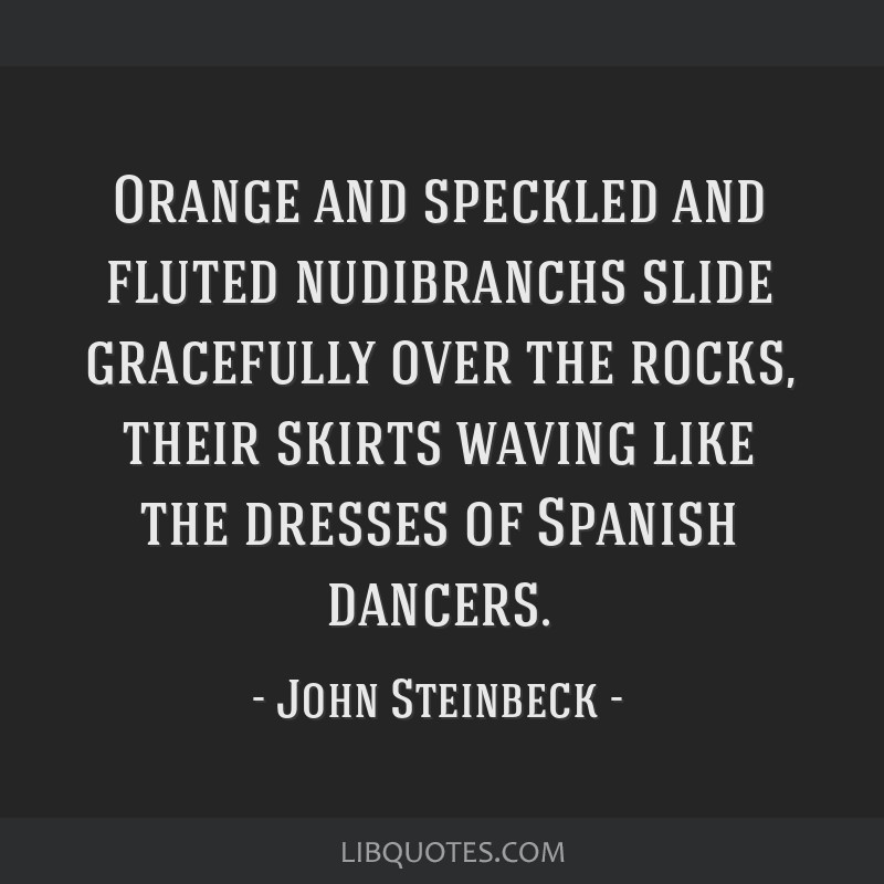 Orange and speckled and fluted nudibranchs slide gracefully over the rocks, their skirts waving like the dresses of Spanish dancers.