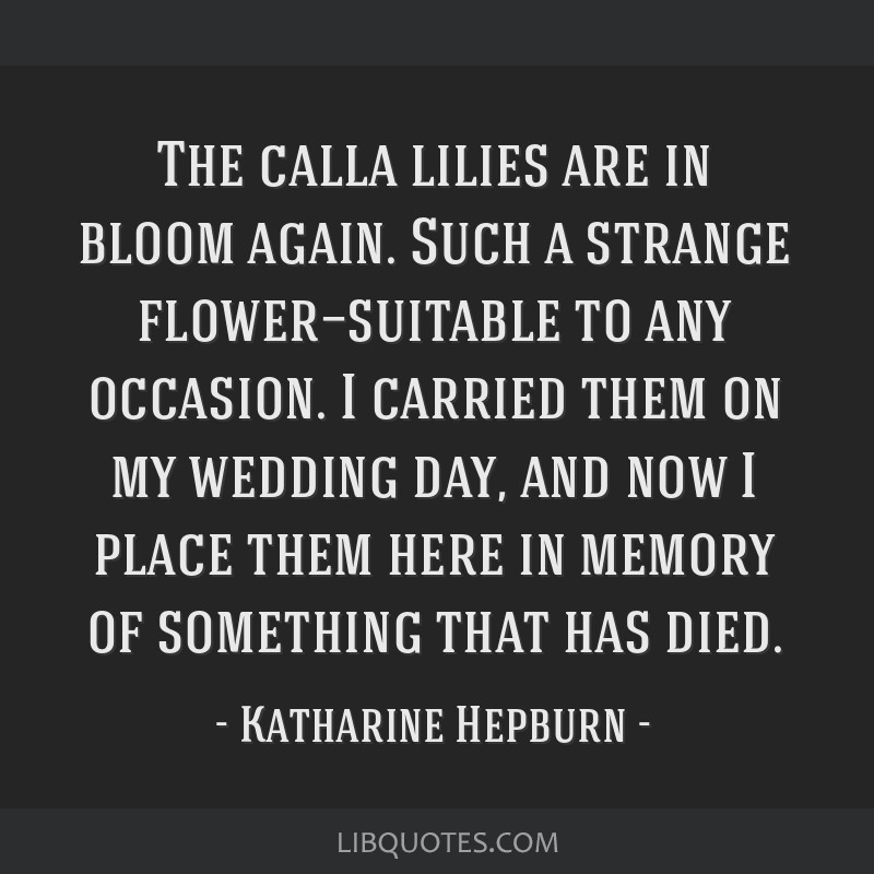 The calla lilies are in bloom again. Such a strange flower—suitable to any occasion. I carried them on my wedding day, and now I place them here in ...