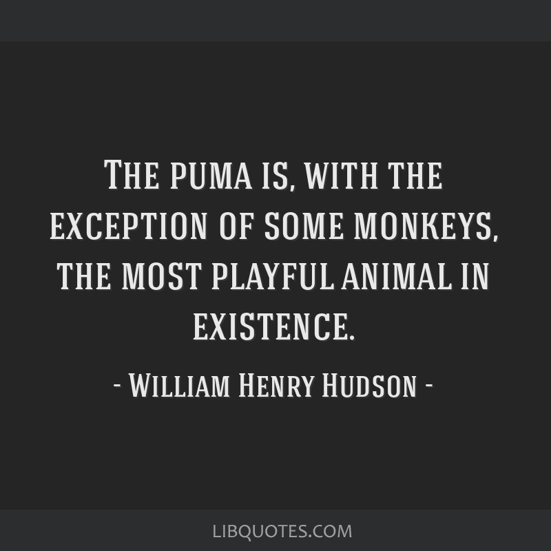 The puma is, with the exception of some monkeys, the most playful animal in existence.